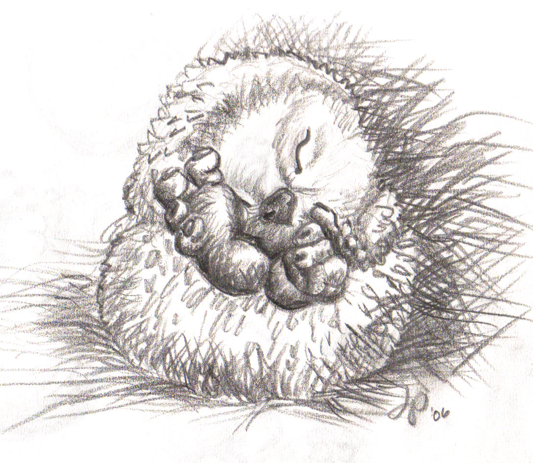 hedgehog (2)